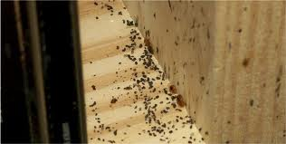 bed-bugs-on-the-wall