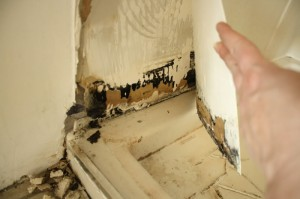 black mold behind drywall 300x199 Black Mold Guide... Everything You Need to Know About The Harmful Spores