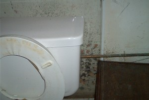 Black Mold Behind the Toilet Bowl