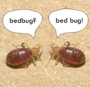 bed bug faq 300x289 Eight Tips to Keep Bed Bugs Off Your Apartment