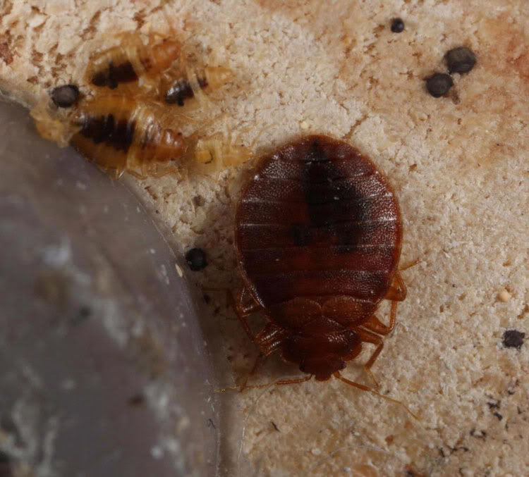 Worker Threatened For Trying To Treat Bed Bugs