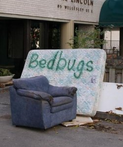 bed bugs on furniture 2 More Bed Bugs Breach Hospitals – How Do You Get Rid of Them If They Break Into Your House?