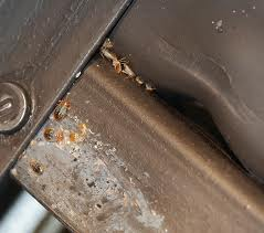 bed bugs on furniture Eight Tips to Keep Bed Bugs Off Your Apartment