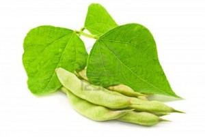 kidney-bean-leaves