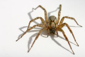 spider 1 How to Kill Spiders – Guide to Keep Them Off Your House