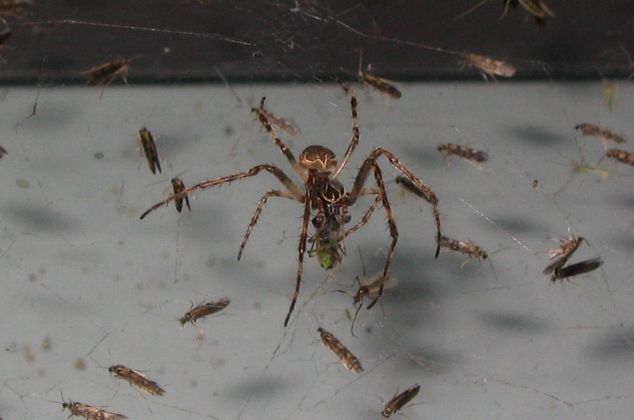 Tips to kill spiders and keep them away for How to keep spiders away from your bed