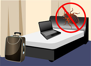 bed-bug-prevention