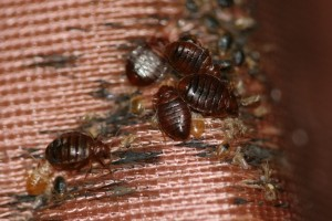 Bed Bugs Scourging A Milwaukee Apartment Building Renters Claimed