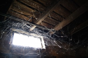 spiders-in-the-basement