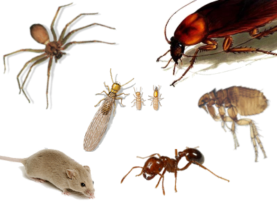 house-pests