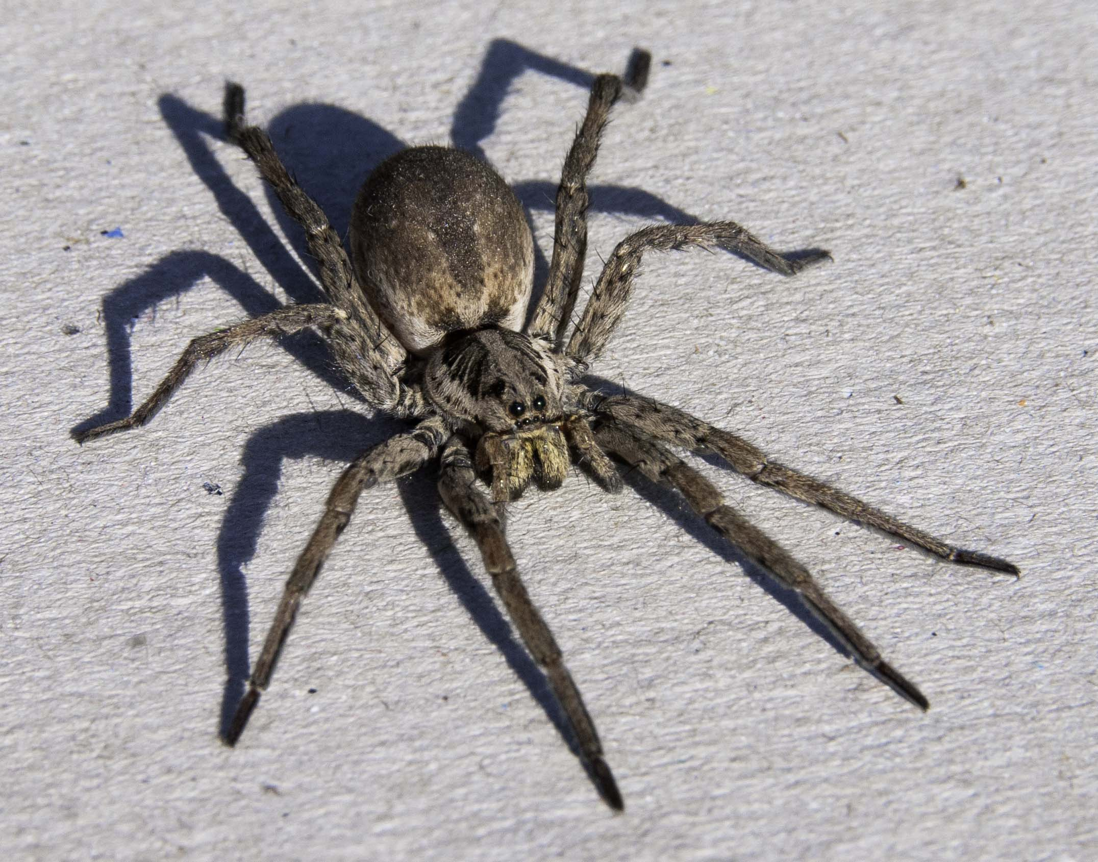 Steps To Eliminate And Prevent Spider Pests