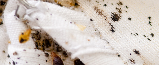 Heat Treatment To Eliminate Bed Bugs Sets Houses On Fire How To