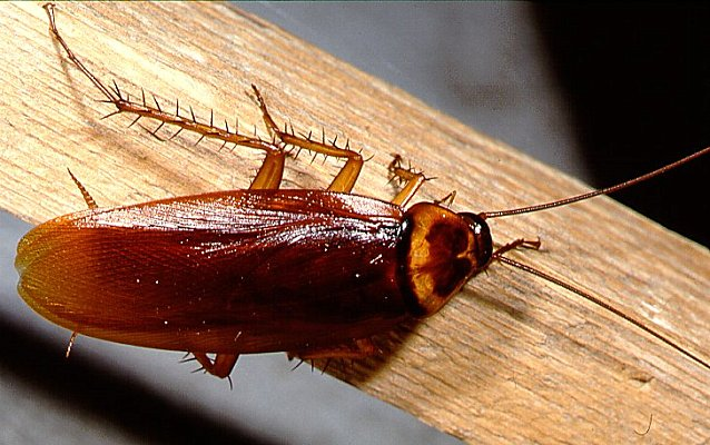 Minnesota Apartment Complex Plagued With Roaches