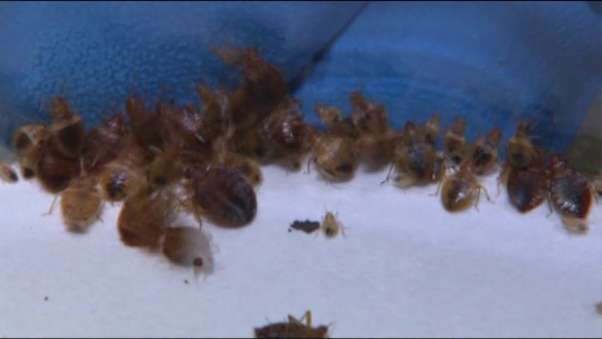 child taken out of school due to bed bugs | mycleaningproducts