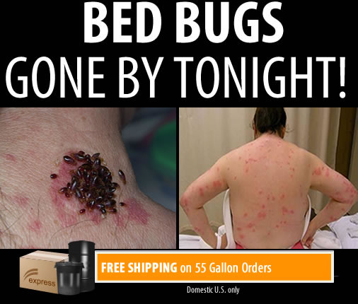 Get Rid of Bed Bugs With Bed Bug Bully